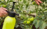 Фитофтора (Фитофтороз) растений и борьба с болезнью