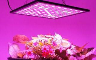 Лампы для выращивания растений