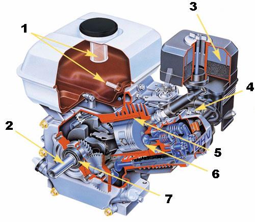 Устройство четырехтактного бензинового двигателя (Honda) мотоблока: 1 - топливные фильтры, 2 - коленчатый вал, 3 - воздушный фильтр, 4 - часть системы зажигания, 5 - цилиндр, 6 - клапан, 7 - подшипник коленчатого вала.